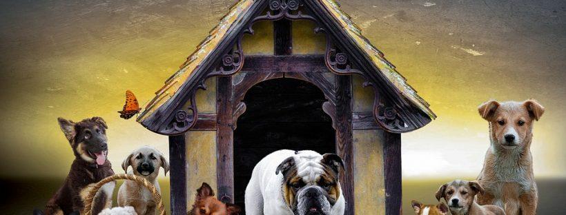 dog shelters